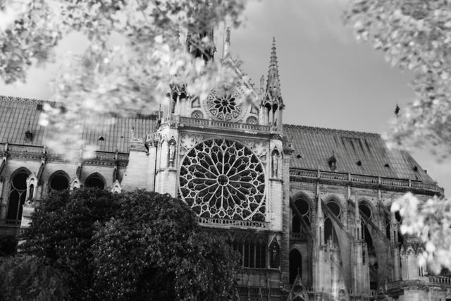 Notre Dame before the fire Black and White